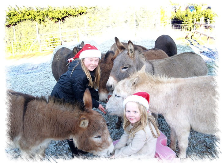Our Miniature Mediterranean Donkeys are family friendly - Christmas fun at the Donkey stud of Surrey Family Pets near Weybridge Surrey