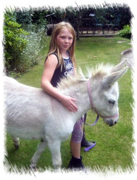 Surrey Miniature Donkey Breeders - Miniature Mediterannean ...